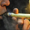 Golden Zeus Cigar